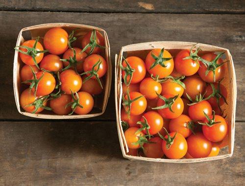 June Gardening Checklist for San Francisco & the Bay Area