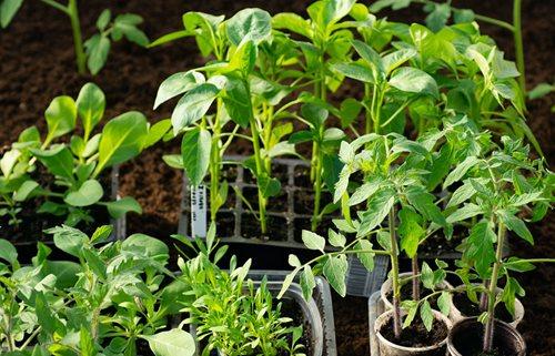 June Gardening Checklist for Washington D.C., Virginia & Maryland