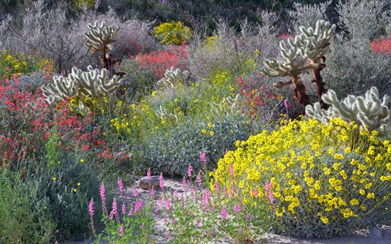 "Wildflower Madness ""Dream Team's"" Portland Garden Garden Design Calimesa, CA"