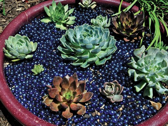 Succulent Dish - Photo by: Pam Penick.