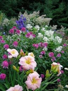 My Garden: A Rustic Perennial Paradise Plant Paradise Country Gardens Caledon, ON