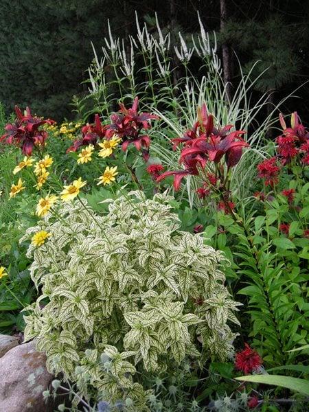 A Rustic Perennial Paradise - Gallery | Garden Design