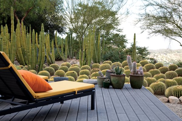 A Waterwise Cactus Garden Photo Gallery Gallery Garden Design