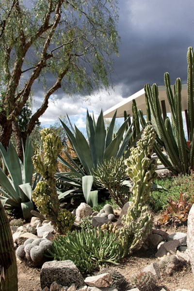 A waterwise cactus garden photo gallery gallery for Cactus garden designs