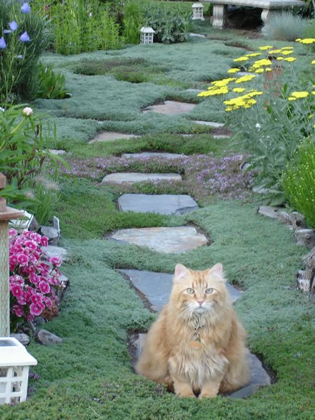An Ever-Changing Therapy Garden - Gallery