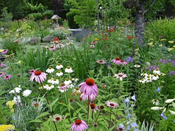 My Garden: An Ever-Changing Therapy Garden  Sue Ingram (Homeowner) Kennewick, WA