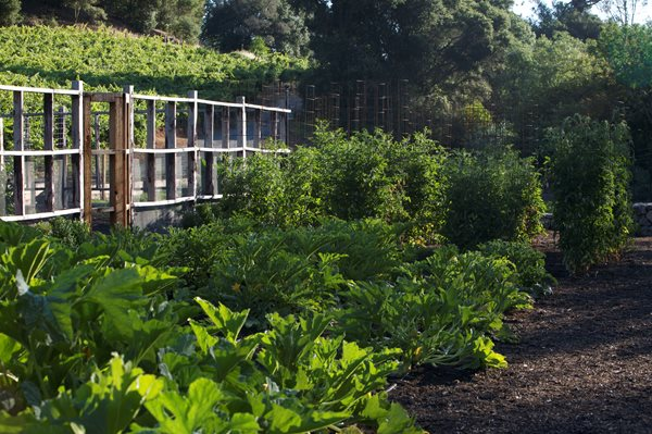 An Organic Kitchen Garden Garden Design Calimesa, CA