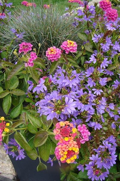 Annual Flowers To Consider For Your Garden This Year