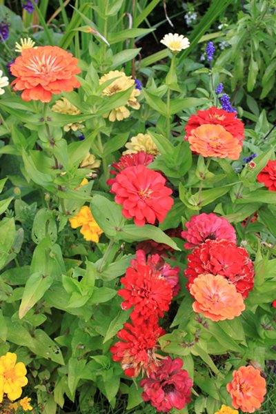 Annual Flowers to Consider for Your Garden This Year        Garden Design Calimesa, CA