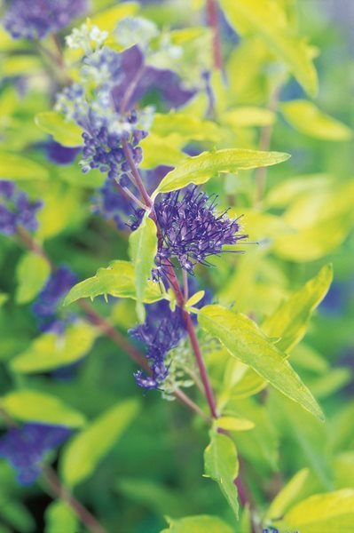 Beautiful Foliage Plants for Your Perennial Garden Gallery