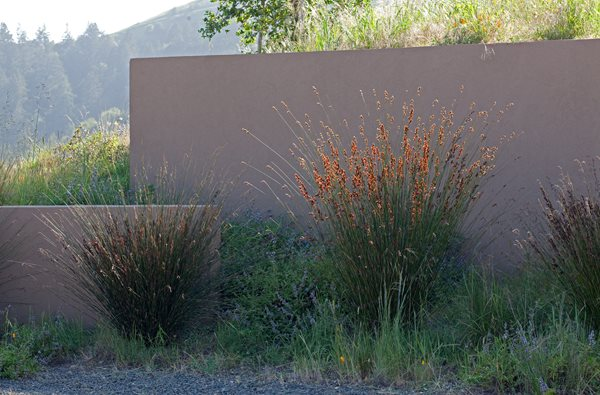 Bernard Trainor — Marin County, California  Garden Design Calimesa, CA