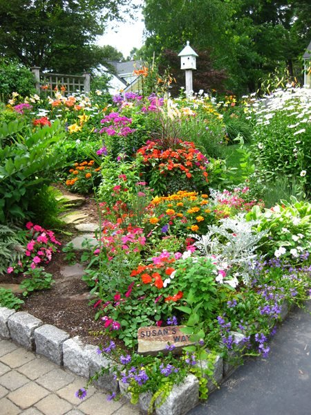 My Garden: Color in Massachusetts Joyce Ahlgren Hannaford (Homeowner) Natick, MA