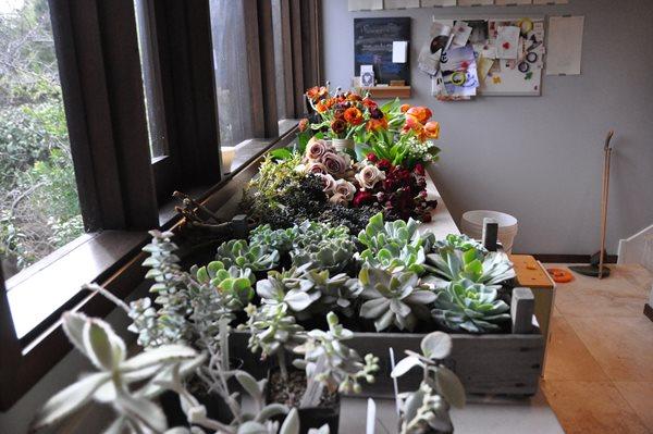 Decorating With Succulents Garden Design Calimesa, CA