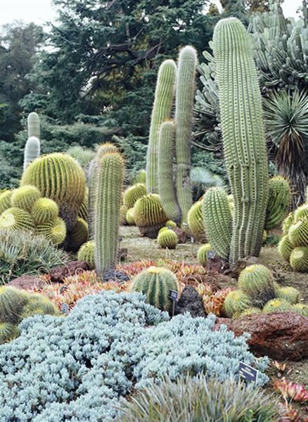 Desert garden succulents cacti gallery garden design for Botanical garden design