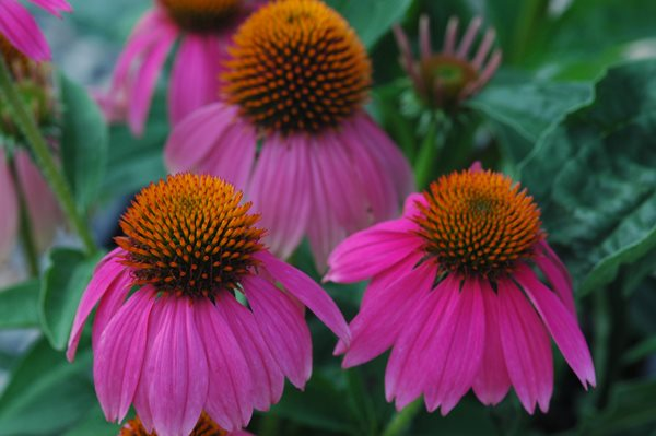 Design a Showy Flowerbed with These 5 Easy-Care Perennials Costa Farms Miami, FL