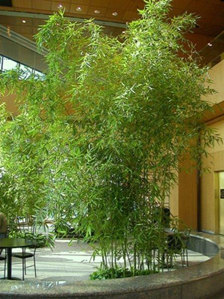 Designing With Bamboo Garden Design Calimesa, CA Good Ideas