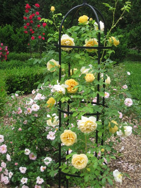 My Garden: From Parking Lot to Rose Garden Kevin Lee Jacobs ,