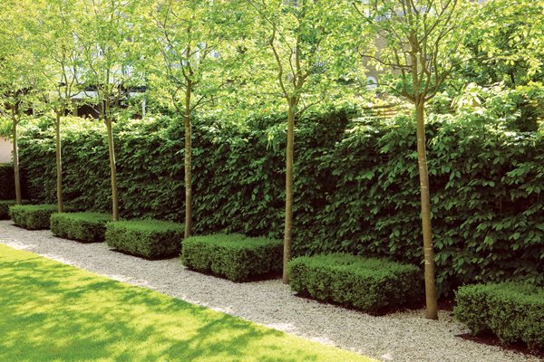 Glorious hedges gallery garden design for Garden design ideas with hedges