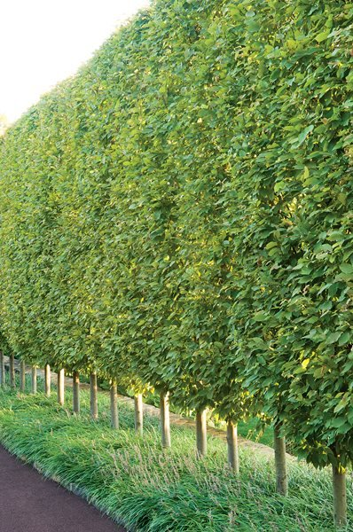 Garden Design Hedges glorious hedges - gallery | garden design