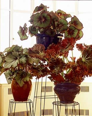 Indoor Houseplants Garden Design Calimesa, CA