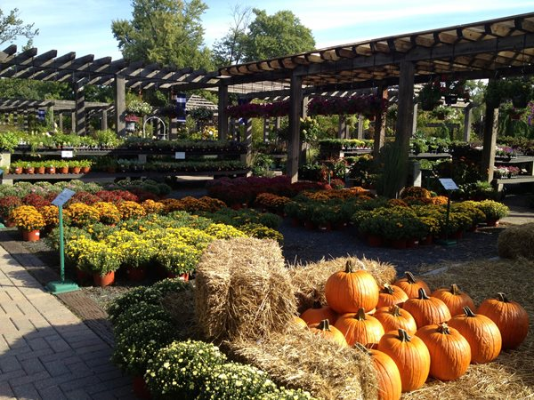 It's Officially Fall!  Garden Design Calimesa, CA