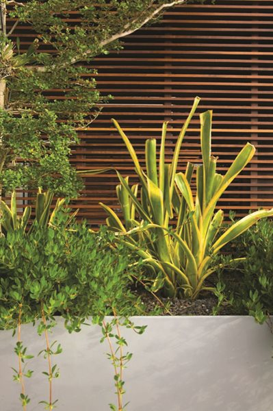 Jungles' Miami Rooftop Garden - Gallery