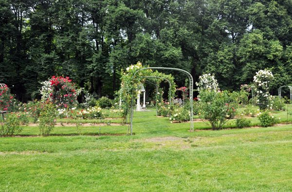 lyndhursts rose garden lyndhurst tarrytown
