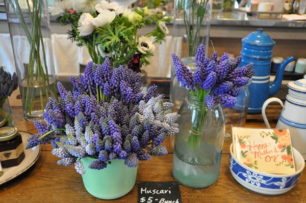 Muscari for Mother's Day Garden Design Calimesa, CA