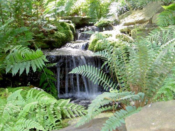 North Carolina Woodland Reverie Garden Design Calimesa, CA