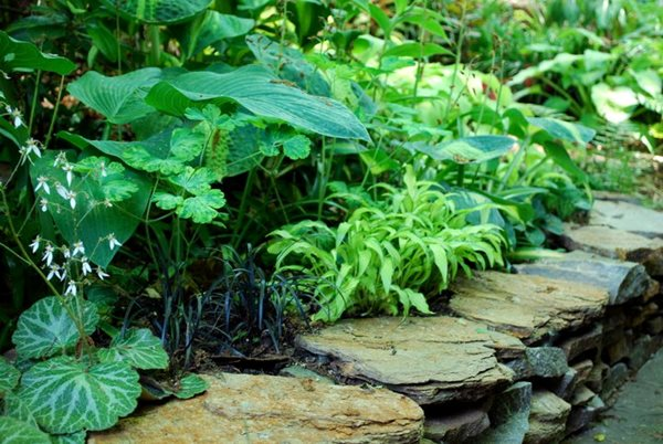 North Carolina Woodland Reverie Gallery Garden Design