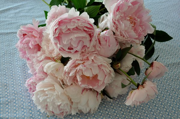 peonies and garden roses garden design calimesa ca