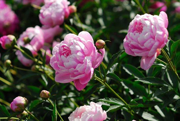 Perennials You Ll Love Gallery Garden Design