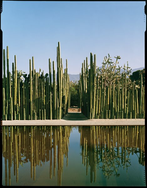 Photos of jardin etnobotanico de oaxaca gallery garden for Jardin oaxaca