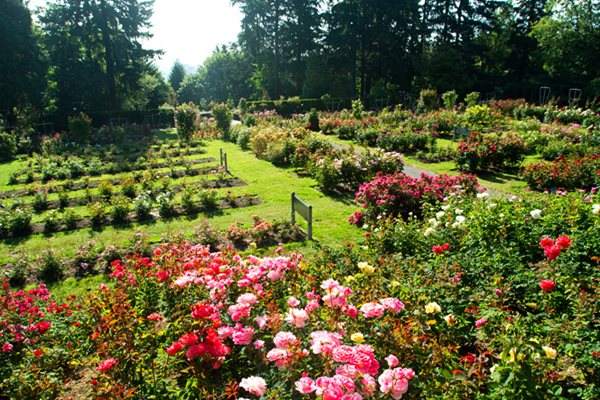 Portland'S International Rose Test Garden - Gallery | Garden Design