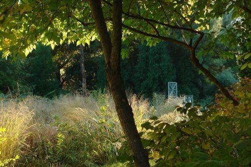 Rick Darke'S American Woodland Garden - Gallery | Garden Design