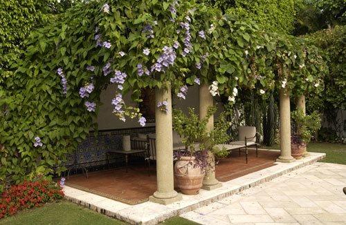 Jungle Backyard Ideas : Sanchez & Maddux The Civilized Jungle  Gallery  Garden Design
