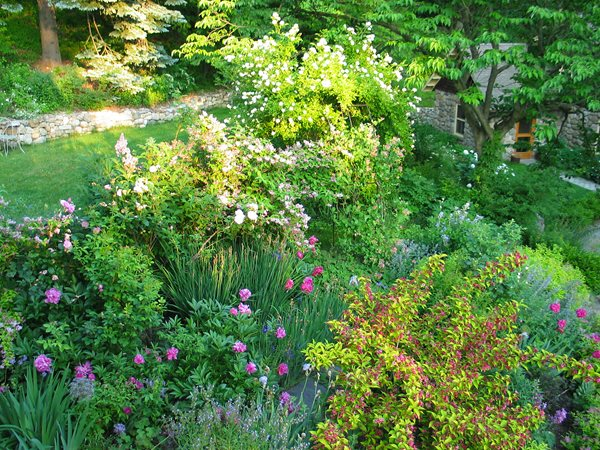 My Garden: Starting Green Garden Design Calimesa, CA