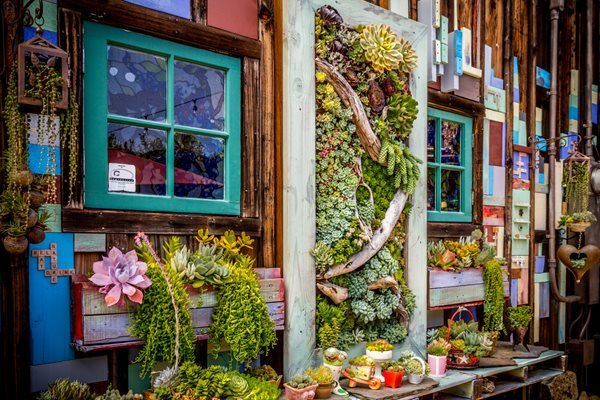 Succulent and Cacti Pictures Succulent Cafe (Peter Loyola) Oceanside, CA