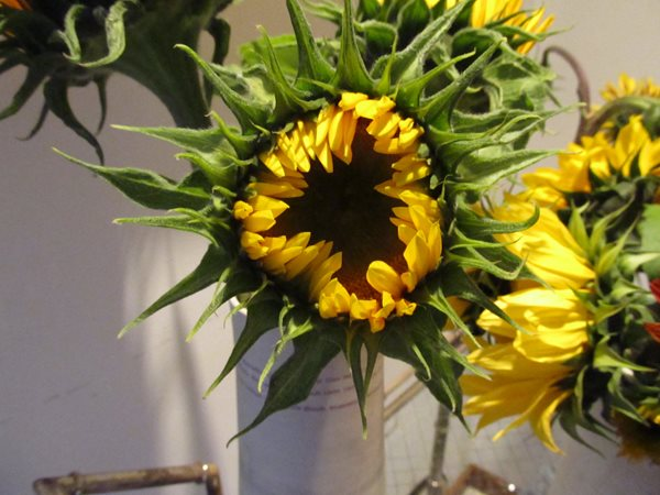 Notes From a Flower Farm: Sunflowers, Zinnias, and Dahlias Garden Design Calimesa, CA