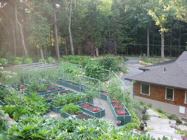 My Garden: Tiers of Vegetables in New York  Nancy Hallberg (Homeowner) Waccabuc, NY