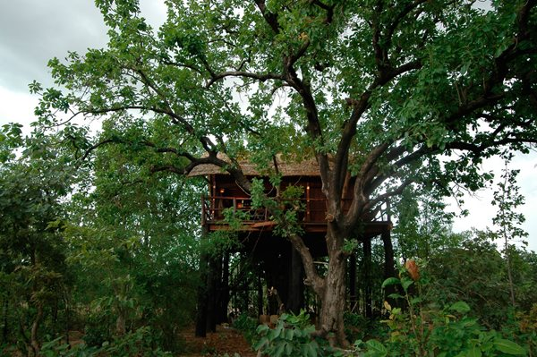 Tree House Hotels Garden Design Calimesa, CA