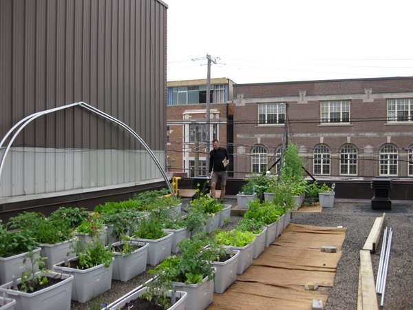 Vegetable Roof Garden - Gallery | Garden Design