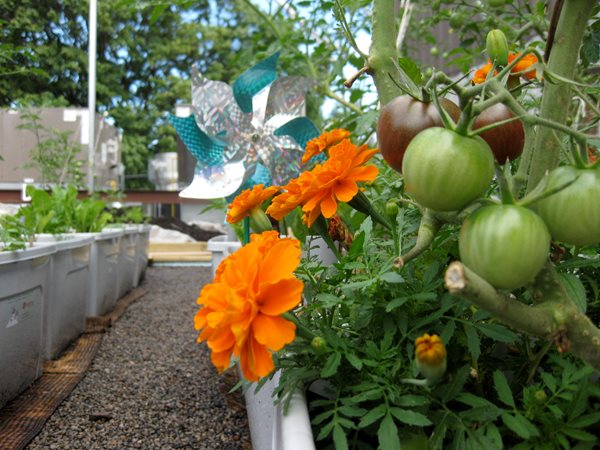 Vegetable Roof Garden Gallery Garden Design - Rooftop vegetable garden ideas