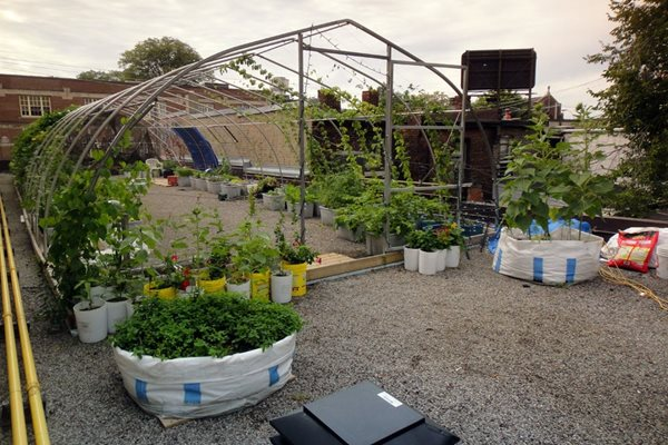 Roof Garden Design Impressive Vegetable Roof Garden  Gallery  Garden Design Review