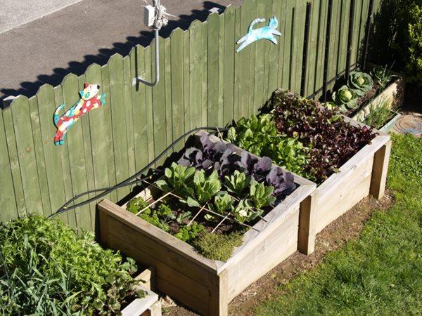Vegetables In New Zealand Gallery Garden Design - garden design images nz