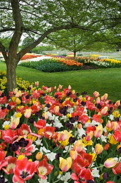 Visit spring blooms at longwood gardens gallery for Spring bulb garden designs