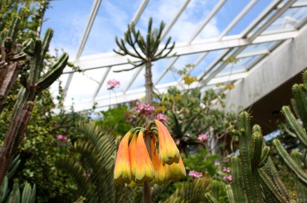 Garden Design South Africa visiting south africa's kirstenbosch - gallery | garden design