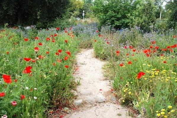 Pasadena Garden Transformed Garden Design