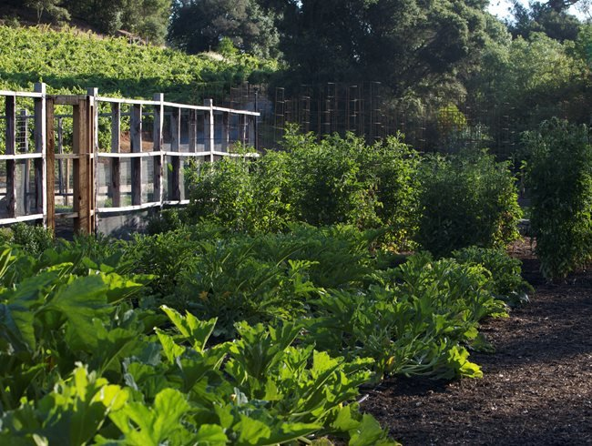 An Organic Kitchen Garden Design Calimesa Ca