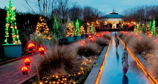 Holiday Lights Garden Design